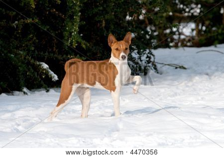 Aristocratic Puppy In Snow
