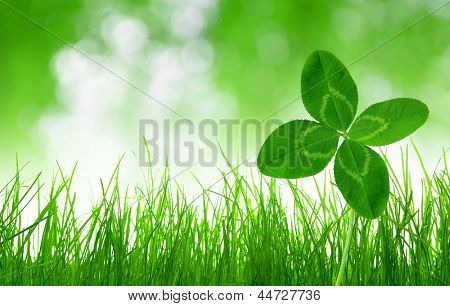 Fresh green grass with clover on green natural background