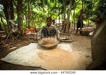 BERDUT, MALAYSIA - APR 8: Unidentified people Orang Asli thresh rice to remove chaff on Apr 8, 2013 in Berdut, Malaysia. More than 76% of all Orang Asli live below the poverty line.