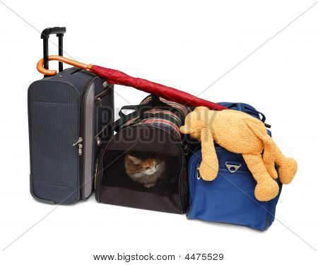Travel Bags And Pet Carrier