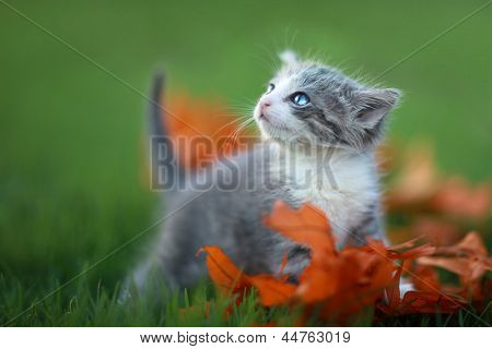 Cute Baby Kittens Playing Outdoors in the Grass