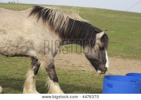 Large Horse About To Feed