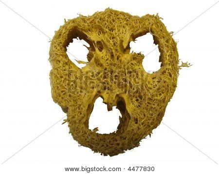 Scary Face Loofah On White