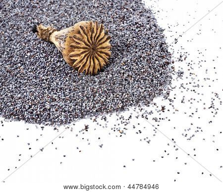 Corner border of poppy seeds and poppy head top view isolated on white background
