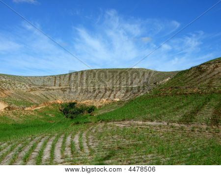 Sugar Cane Plantation On The Hill