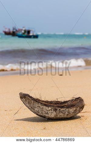 Coconut on the beach in Thailand