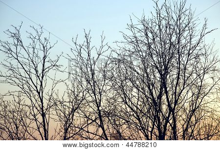 Abstract sky and branches