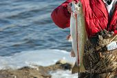 foto of steelhead  - An angler holding a just caught Steelhead Trout  - JPG