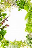 Freshly harvested herbs, herbs frame over white background