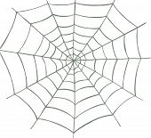 pic of spider web  - Vector illustrated spider web on white background - JPG