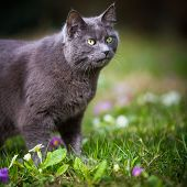 Cute kitty cat outdoors on a green lawn