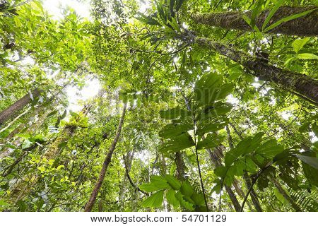 Looking up to the rainforest canopy