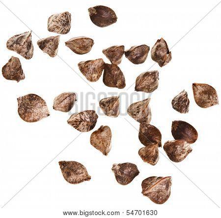 buckwheat raw seeds close up extreme macro shot surface isolated on a white background