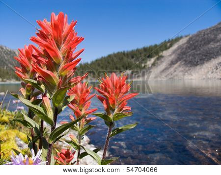 Indian Paintbrushes And Alpine Lake