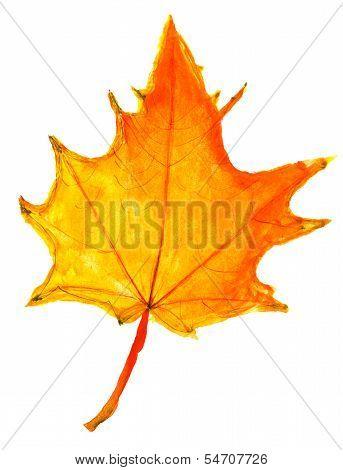 Children Drawing - Autumn Yellow Maple Leaf