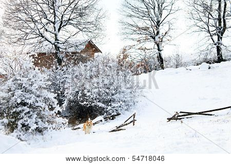 Bulgarian Winter Meadows