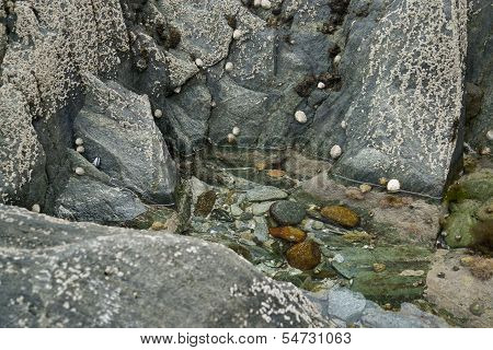 Rock And Barnacles
