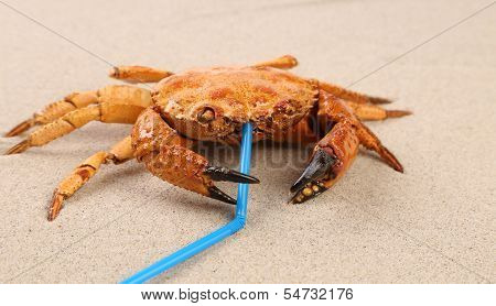 Red crab on sand and tubule for a cocktail