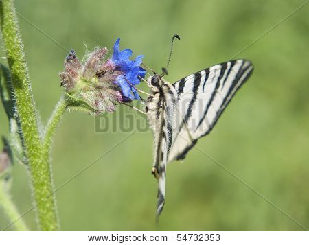 Spring Butterfly On A Flower