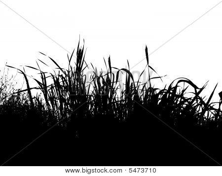 Fundo Grass.eps