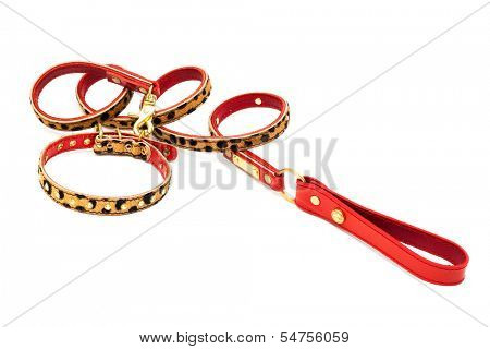 nice leash and collar on a white background