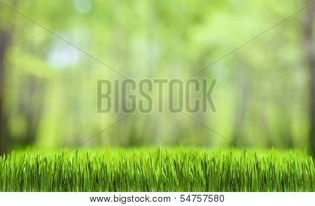 green grass and forest nature background for desktop wallpaper