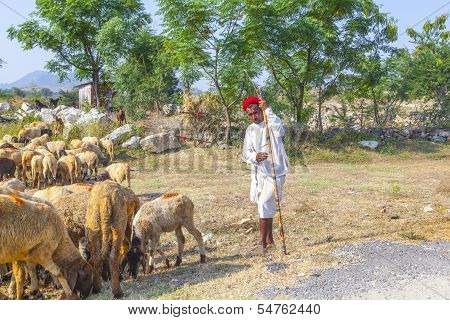 A Rajasthani Tribal Man Wearing Traditional Colorful Red Turban And Protects The Goats