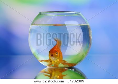 Goldfish in aquarium on natural background