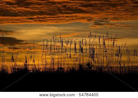 Florida beach grass sunset
