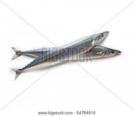 Two Pacific saury (Cololabis saira / mackerel pike / sanma ) isolated on white.