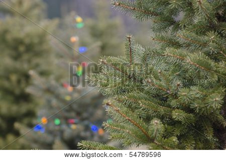 Christmas tree with lights in tree farm