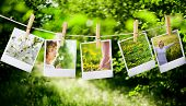 stock photo of polaroid  - a prints with a natural concepts pictures - JPG