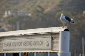 Avalon Farewell Sign With Bird