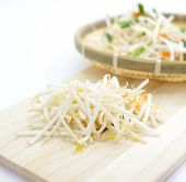 stock photo of soybean sprouts  - close up fresh Bean Sprouts on White Background - JPG