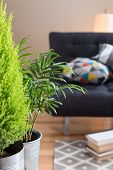 stock photo of futon  - Green plants in the living room with sofa lamp and books in the background - JPG