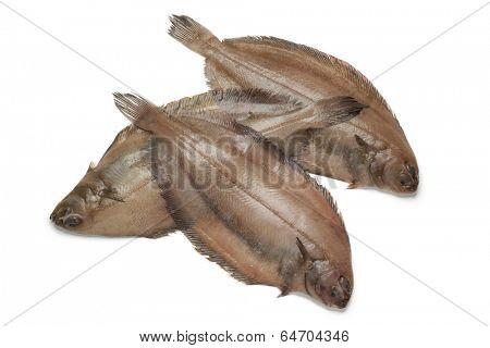 Fresh raw megrim fish on white background