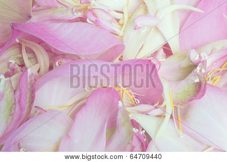 Petal and pollen lotus  background
