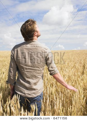 Man In Wheat Field