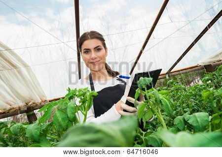 Young female agriculture engineer inspecting crop