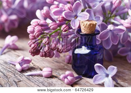 Tincture Of Aromatic Lilac Flowers Close-up