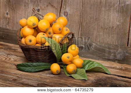 Fruits Of Loquat Tree