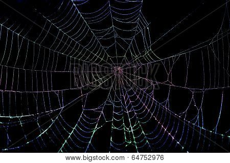 Colorful Spider Web