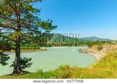 Turbid Water Of The Mountain River Katun In Altay Edge