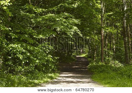 Broadleaf Forest - Forest Path