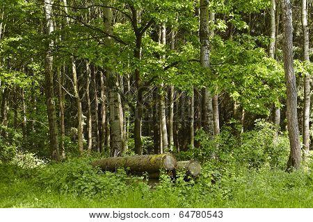 Broadleaf Forest - Logs