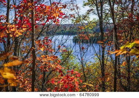 Fall forest framing scenic autumn lake view from Lookout trail in Algonquin Park, Ontario, Canada.