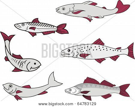 Miscellaneous Fish