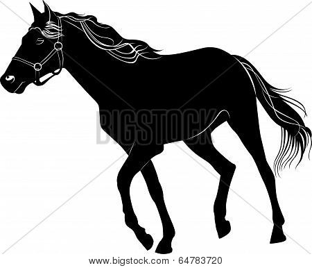 horse nature  animal