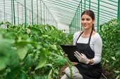stock photo of greenhouse  - Portrait of a young woman at work in greenhouse - JPG
