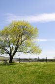 foto of split rail fence  - Beautiful spring day with new leaves on tree - JPG